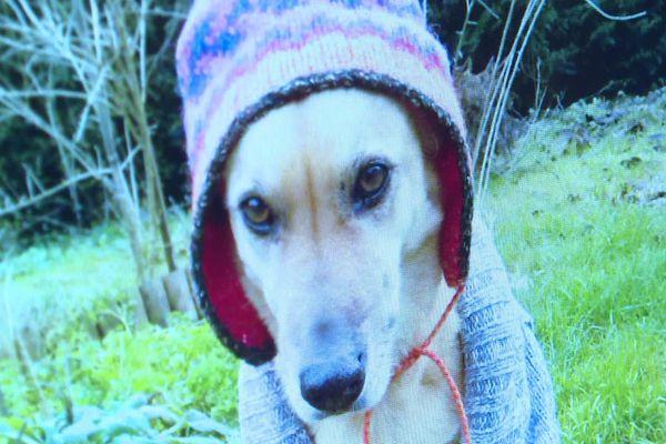 Gaïa a été mordue à mort par trois gros chiens venus l'attaquer chez sa maîtresse, par surprise, à Quettreville-sur-Sienne. Le chagrin de sa propriétaire est immense.
