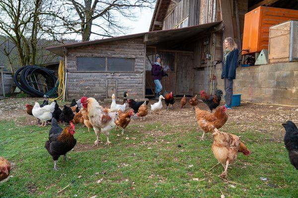 Anouck et Zoé viennent d'Allemagne et apprennent la vie à la ferme durant leurs vacances scolaires.
