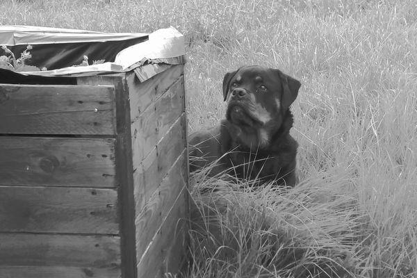Les chiens de Sandra Vincente, dont l'un d'eux apparait sur cette photo, ont été amenés à la fourrière, le temps de l'enquête.