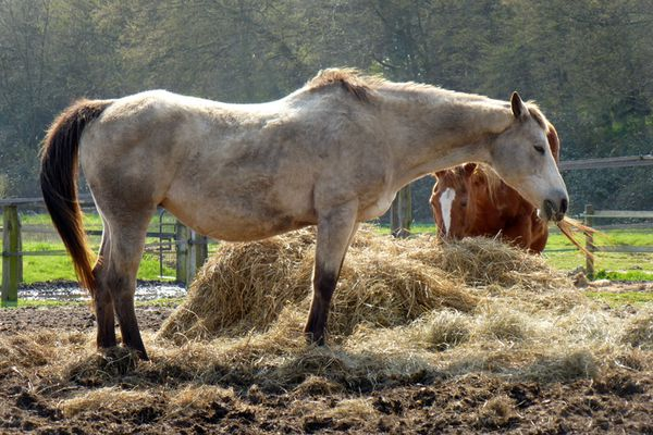 Les marchands d'aliments pour animaux font partie des commerces dits essentiels