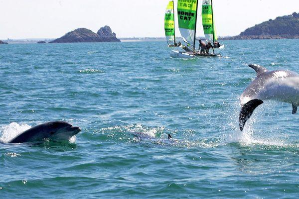 Les skippers de la course au large veulent prendre plus en considération le monde marin