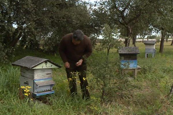 Le taux de mortalité des abeilles aurait triplé à cause des pesticides, David Nivet est apiculteur et vigneron à Perpignan aujourd'hui il tire la sonnette d'alarme - 27 mars 2017