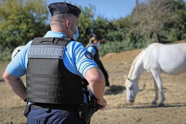 Des gendarmes patrouillent chez les éleveurs et les propriétaires de chevaux pour tenter de contrer les actes de mutilation envers les équidé, notamment les chevaux.