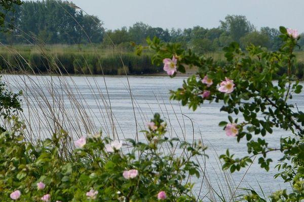 La promenade des Bords de Loire est le meilleur point de vue qui soit pour observer dame nature