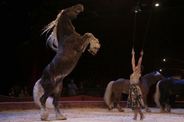 """Cet été à Ruynes-en-Margeride, dans le Cantal, les stars seront les chevaux avec le spectacle en plein air de la compagnie Jehol, """"Davaï""""."""