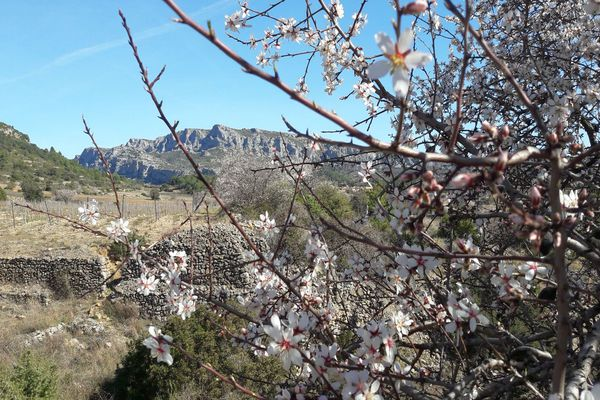 Parc naturel régional des Corbières-Fenouillèdes - archives