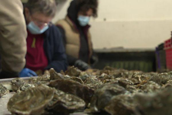 Tri des huîtres à Locoal-Mendon, chez Jean-Noël et Tifenn Yvon
