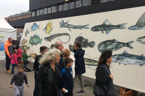 Transat Jacques Vabre 2019 - Au départ de la course, la fresque collaborative proposée au public pour sensibiliser à l'avenir des océans.
