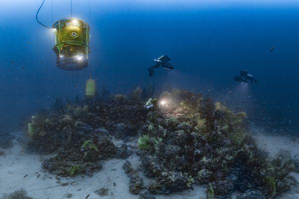 Pour son documentaire, Laurent Ballesta a passé 28 jours à 120 mètres sous la surface de la mer