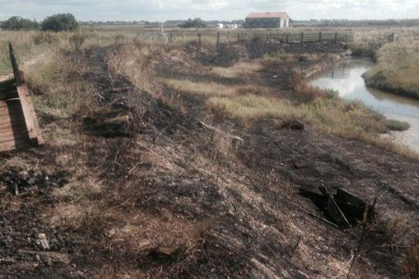 La végétation brûlée autour de la plateforme de la LPO