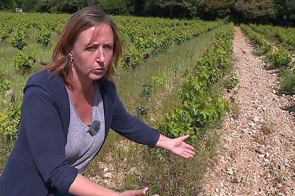 """Vic-la-Gardiole (Hérault) - une chercheuse mise sur la biodiversité pour créer la vigne de demain et concourt à """"Mon projet pour la planète"""" - mai 2018."""