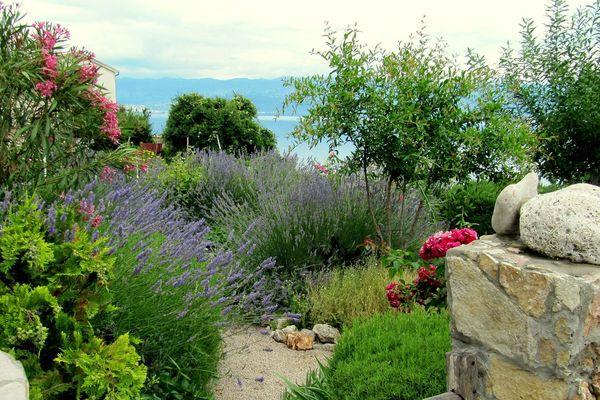 Oliviers, lavandes, iris, graminées en pot ou en pleine terre, les plantes méditerranéennes invitent au voyage.