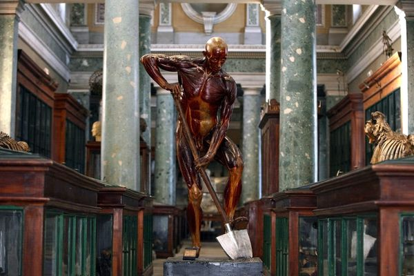 Les visites du musée d'anatomie de l'ancienne faculté de médecine, dans le centre-ville de Montpellier, sont habituellement très appréciées