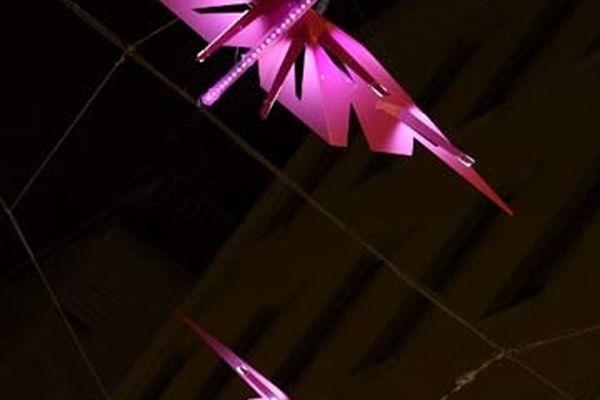 (face au n° 10 rue Burdeau) Flamingos par Pitaya