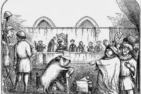 Une truie et ses six porcelets jugée coupable du meurtre d'un enfant en 1457.