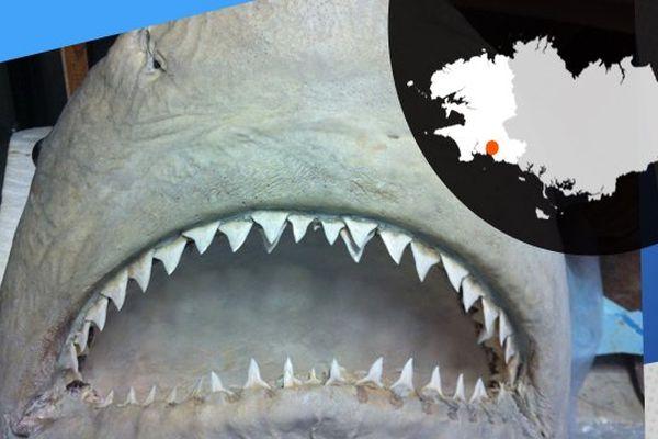 Un requin empaillé, oeuvre de Bernard Bourles