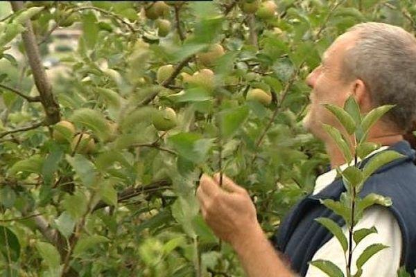 A Sellières, dans le verger, juste des pommes