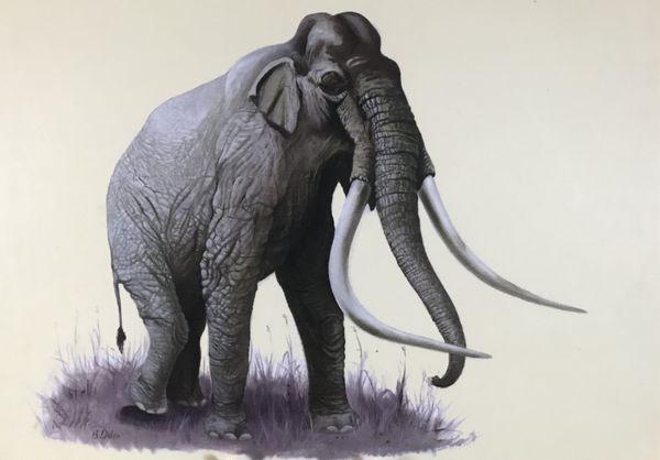 Le Mammuthus méridionalis était très grand. Celui exposé mesure 4 mètres de hauteur et 7 de longueur.