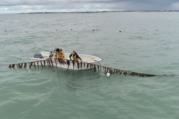 La culture des laminaires en pleine mer