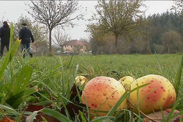 Les vergers de Glandon au sud de la Haute-Vienne.