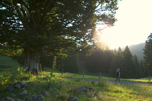 Paysage du Haut-Jura, près des Rousses
