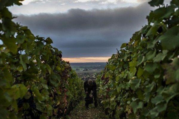 """Les """"climats"""" des vignobles de Bourgogne sont 1 247 parcelles qui sont situées sur les pentes de la côte de Nuits et de la côte de Beaune, dans le département de Côte-d'Or."""