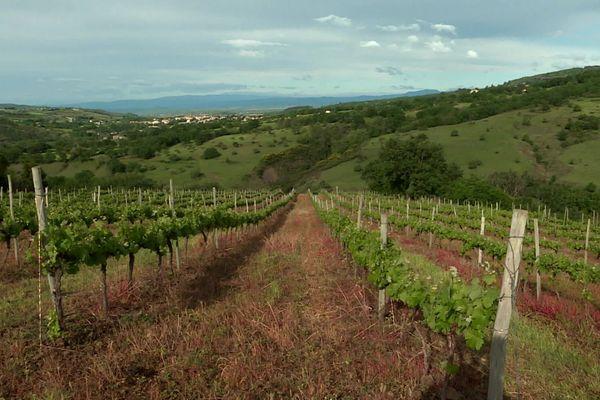 En Ardèche méridionale, les petites exploitations agricoles rompues à l'exercice de la vente directe, du circuit court, sont nombreuses à finalement s'en sortir grâce à cet élan de proximité