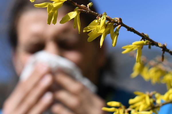 Les pollens de graminées sont très présents dans onze départements d'Auvergne-Rhône-Alpes.