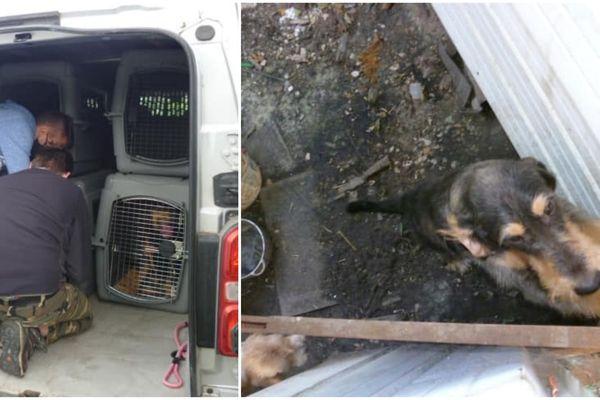 Huit chiens ont été retrouvés abandonnés dans la commune de Jussecourt-Minecourt dans la Marne, par la SPA de Vitry-le-François et la gendarmerie de Sermaize-les-Bains, le 17 août au matin.