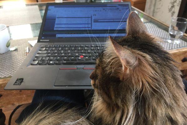 Pour télétravailler, on s'installe souvent sur la table basse du salon, le chat remplace aussi les collègues de bureau.