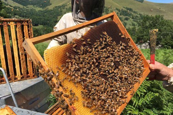 La canicule de l'été 2019 a été dévastatrice pour les ruches en Occitanie comme dans presque partout en France.