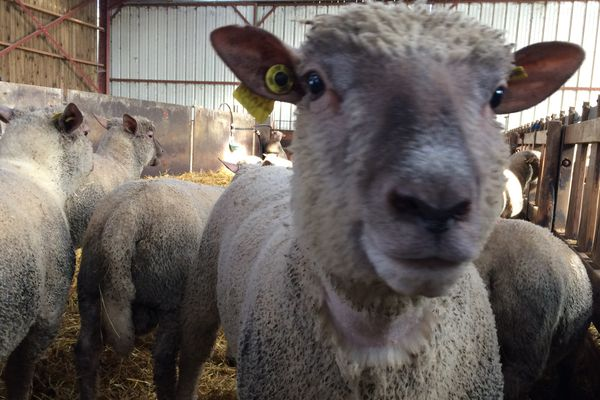 Les moutons ne sont plus dans le pré.