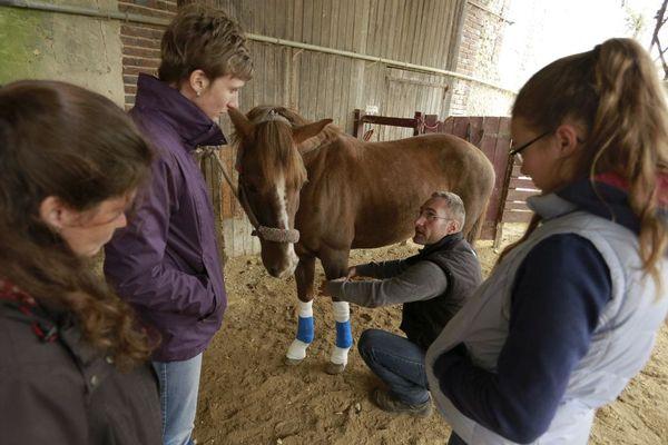 L'entreprise Classequine forme les propriétaires de chevaux aux gestes de première urgence pour secourir leurs animaux