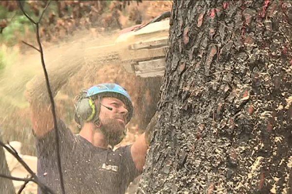 A Carros, on  coupe les arbres en attendant de repenser la forêt.