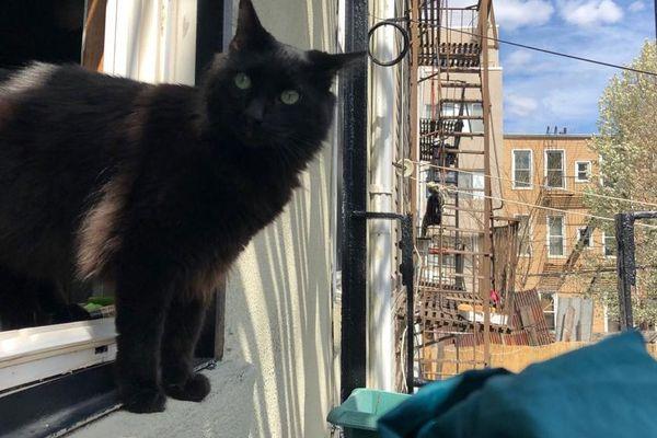 Le chat de Lucile, confiné lui-aussi.
