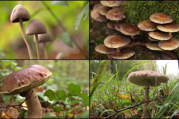 Quelques uns des spécimens croisés ce dimanche 27 octobre dans les bois en Côte-d'Or.