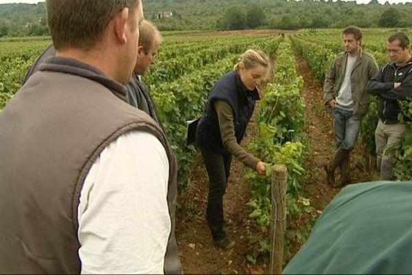 Inspection des vignes à Rully (71)