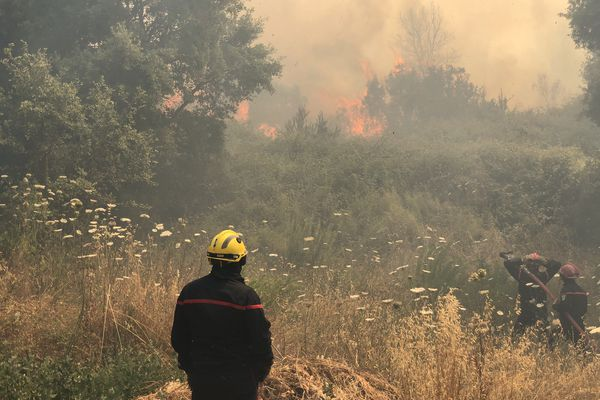 Ce vendredi 25 juin, un incendie s'est déclaré sur les hauteurs de la Confina 1, à Ajaccio.