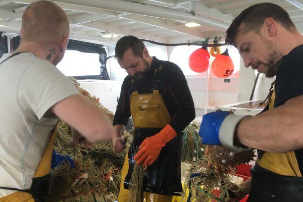 Les matelots du Times Kloé, Flavien, Mickaël et Alban, démaillent des araignées à foison au large des îles anglo-normandes