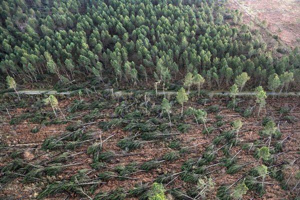 Déjà meurtrie en 1999, la forêt des Landes subissait à nouveau les assauts du vent en 2009 comme ici à Labouheyre.