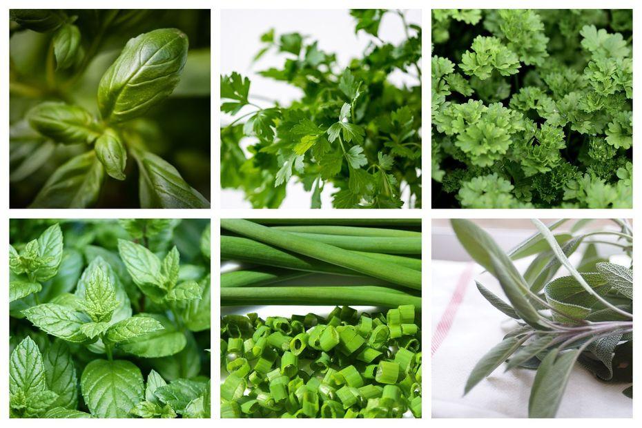 Jardinage: congelez et séchez les plantes aromatiques pour l'hiver
