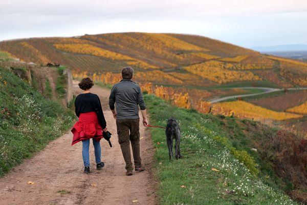 Sentier dans les vignes au-dessus de Turckheim.