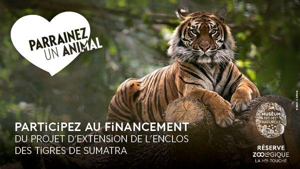 Participez au projet d'extension de l'enclos des tigres du Sumatra.