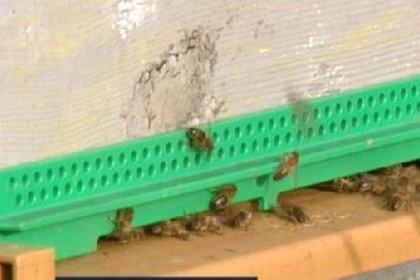 Les abeilles rentrent à la ruche.