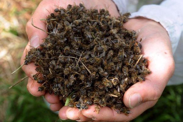 René Berrini, apiculteur veut savoir qui a tué ses abeilles