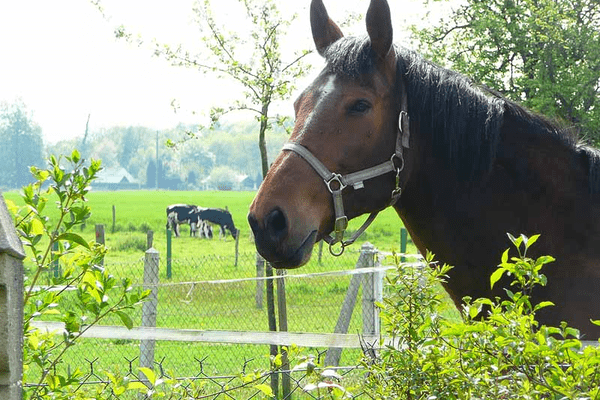 Un cheval dans son pré (photo d'archive)