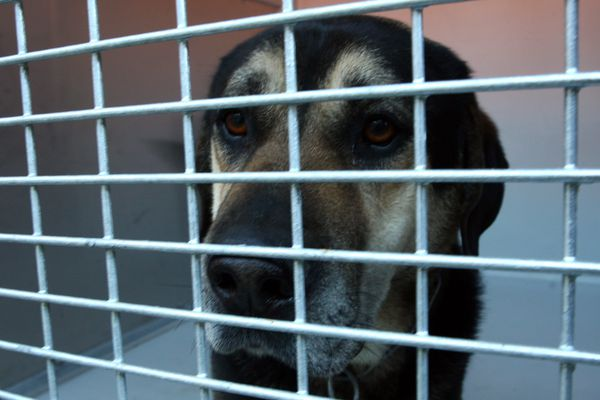 Un chien dans un refuge pour animaux.