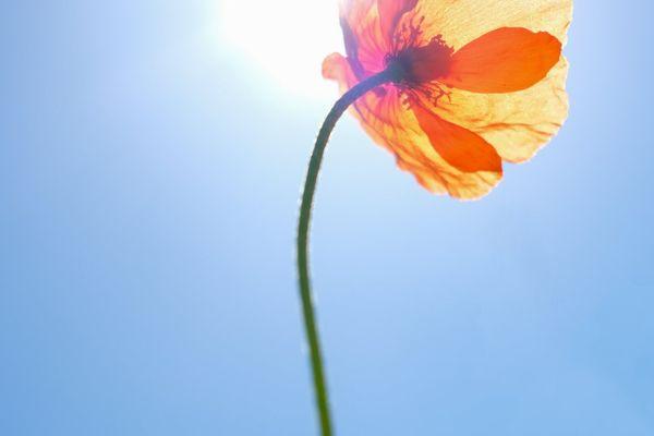 Les fleurs profitent du soleil