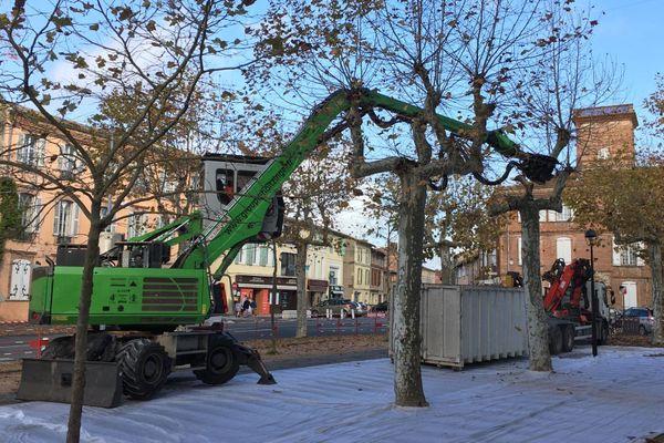 L'abattage de 27 platanes a commencé ce lundi 16 novembre 2020, sur la promenade des Lices, à Rabastens, dans le Tarn.