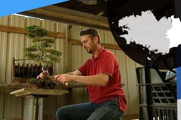 Dans sa pépinière Jérôme prend soin de ses bonsaïs